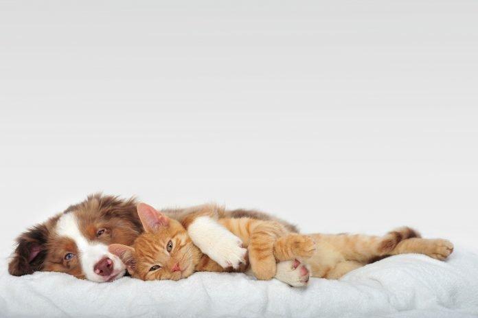 dormir-avec-son-animal-de-compagnie-?